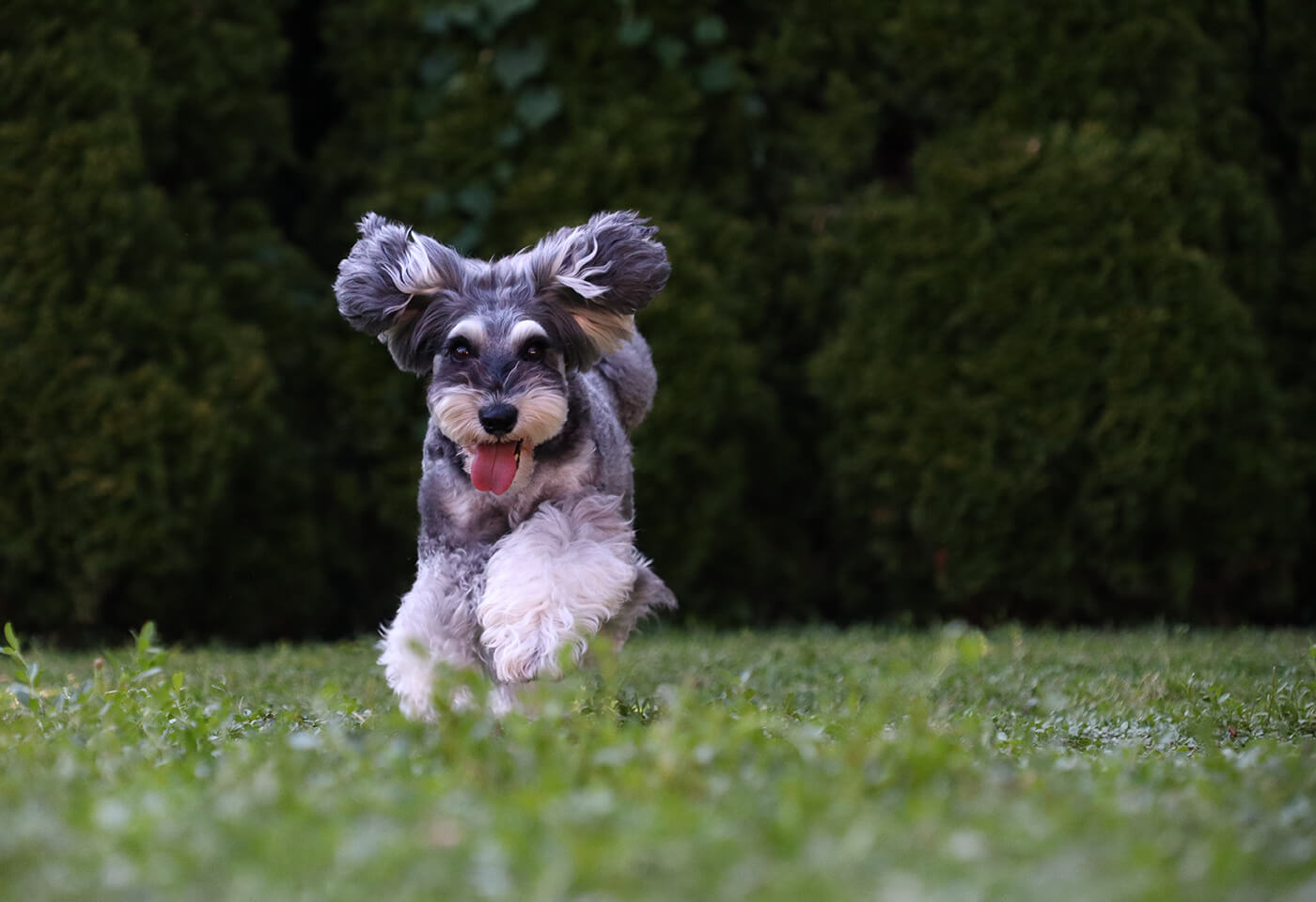 Image of a running dog taken using the EOS M50 Mark II mirrorless camera