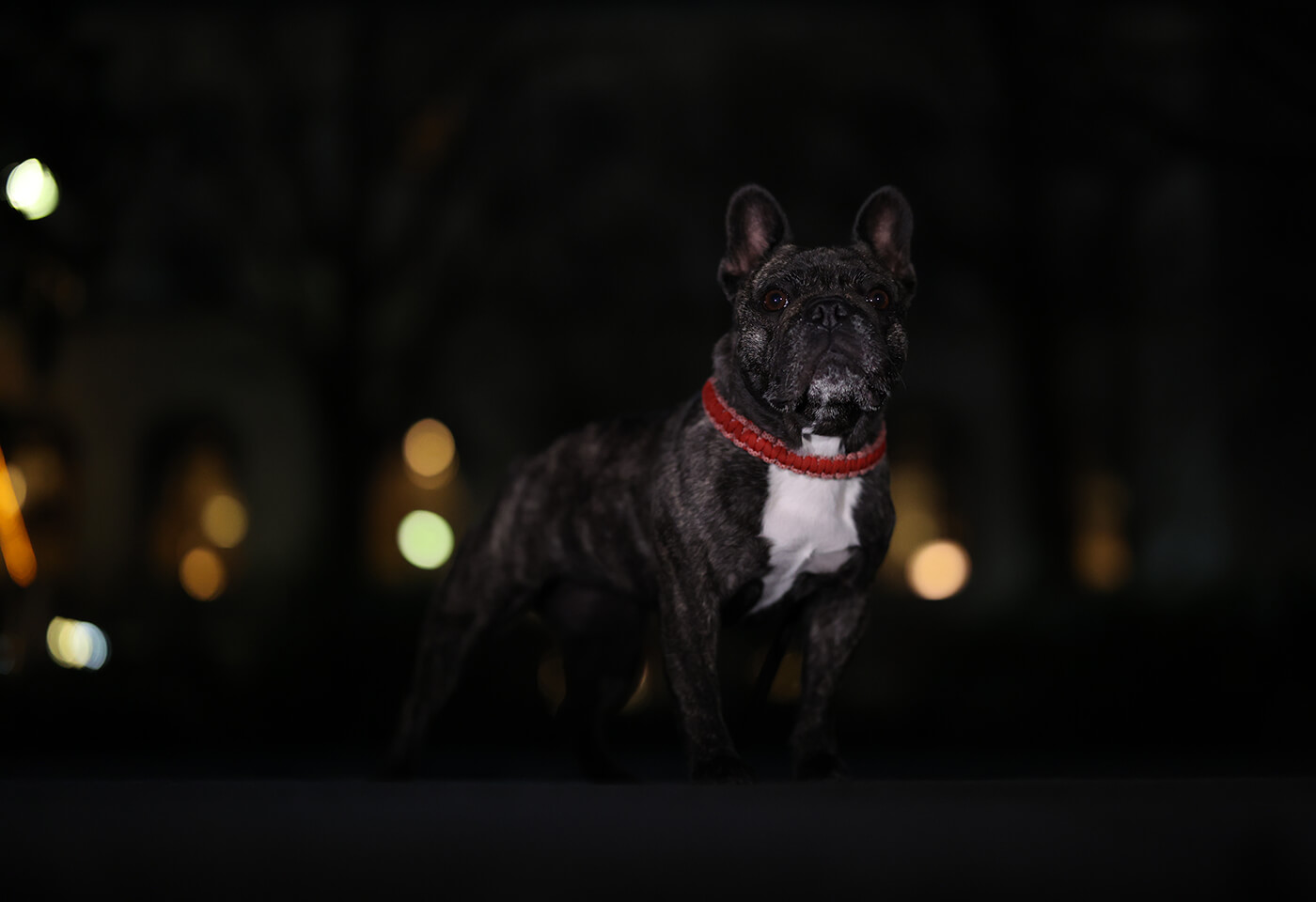Image of a dog in the dark taken using EOS R6