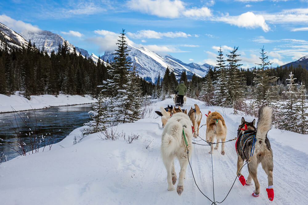 Dogsledding in Alberta, Canada.jpg