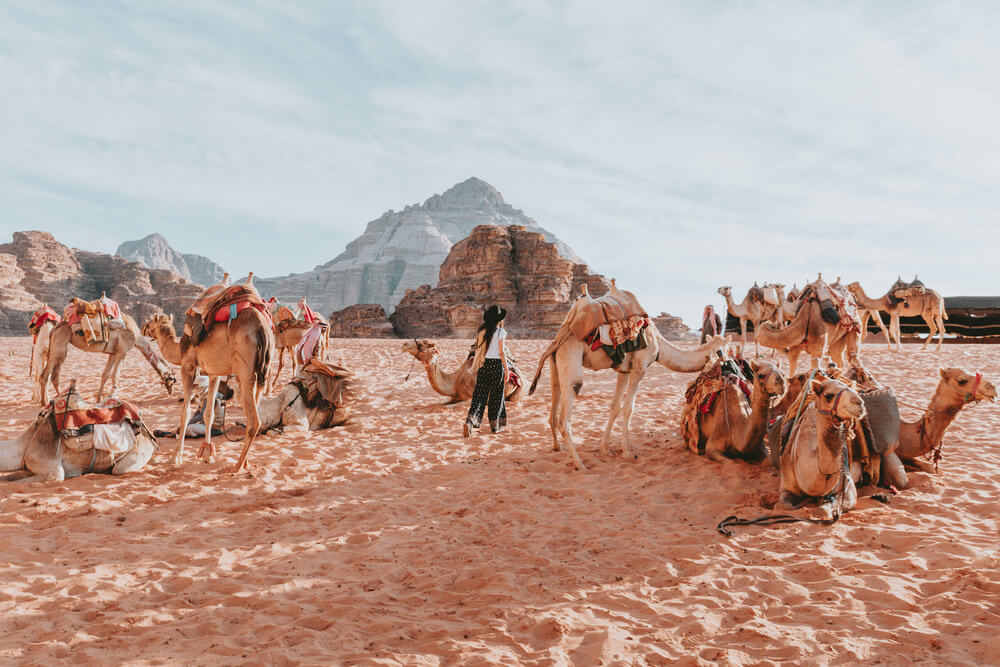 A caravan of camels and a traveller in the Wadi Rum Desert. Shot by Jona Grey
