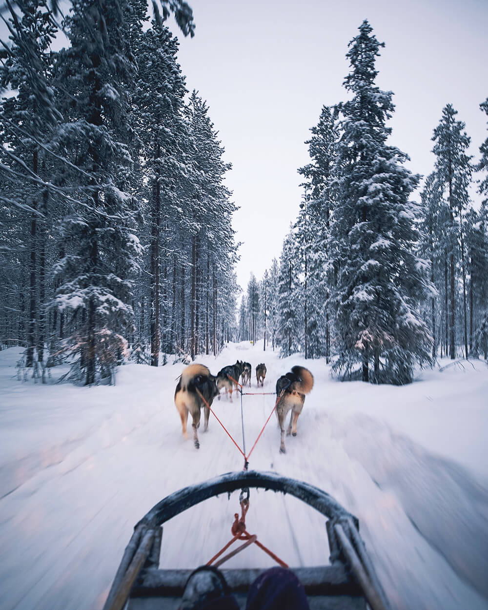 Kusky ride in Kittilä. Photo by Elaine Li
