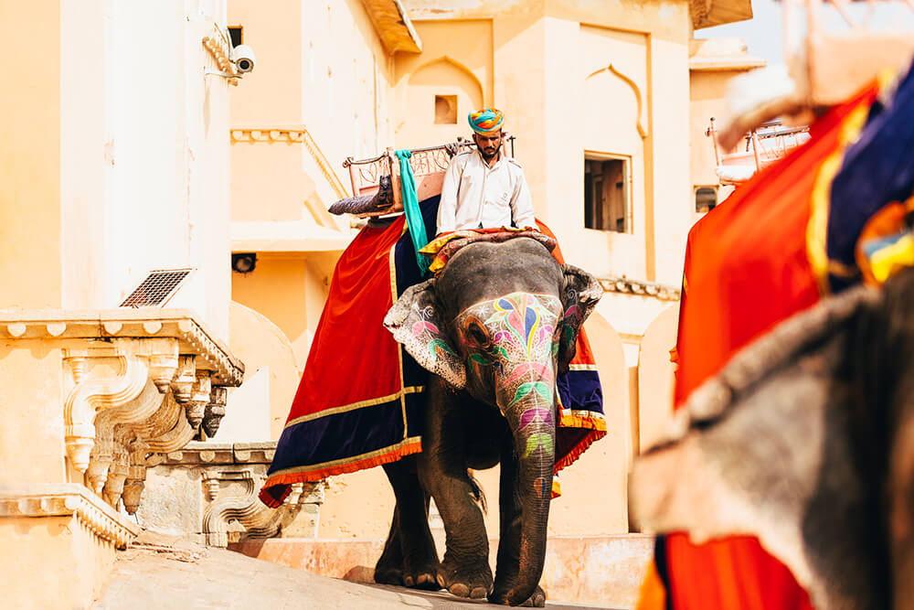 Image of an elephant dressed in a colourful attire. Shot by Melissa Findley