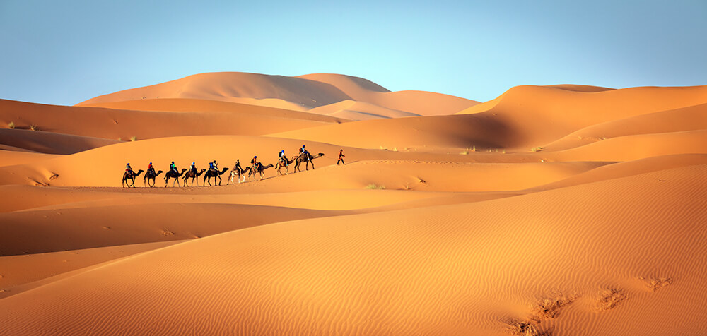 a caravan of camels in Morocco. Image by Brook Rushton