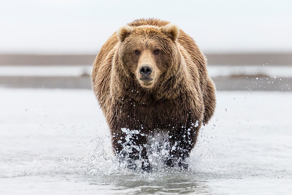 Image of bear in water