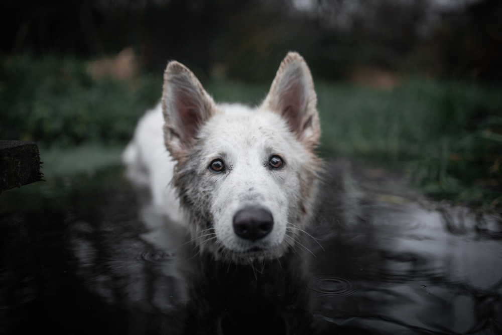 photography of dog in water