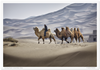 Kumtag Desert camel riders photographed by Jackie Ranken